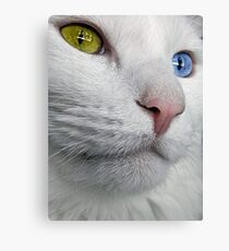 Do Cats Wonder About The Meaning of Life? Canvas Print