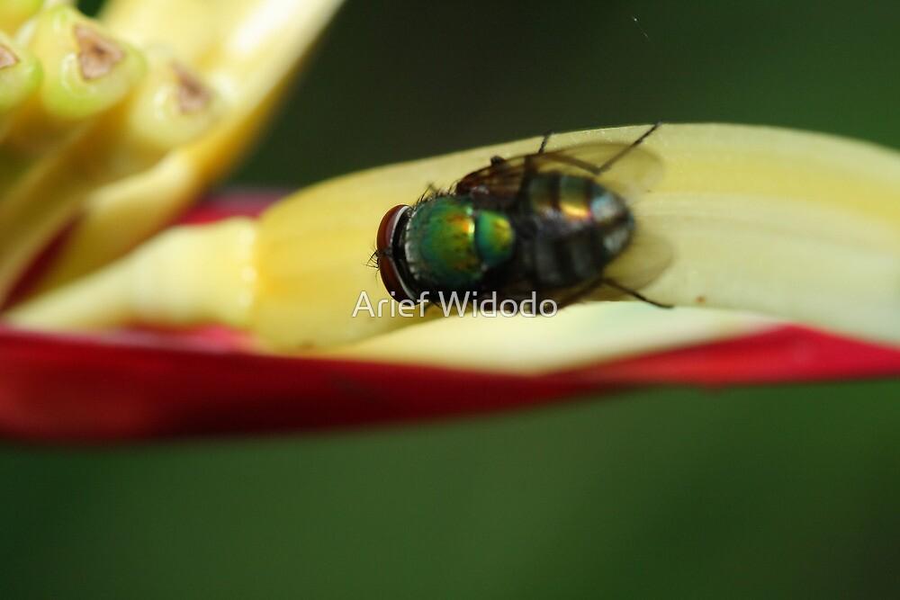 Fly on leaf by Arief Widodo