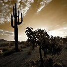 The Sonoran in Sepia by Sue  Cullumber