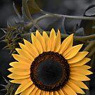 Sunny Side by JHRphotoART