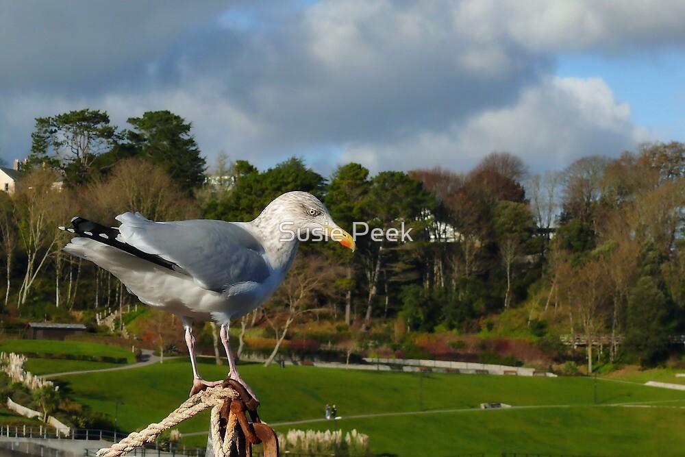 Bird's Eye View ~ Lyme Regis by Susie Peek