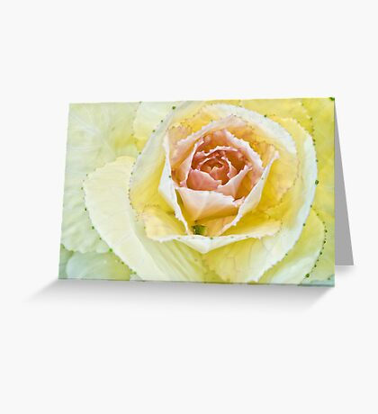 Delicate Kale Greeting Card