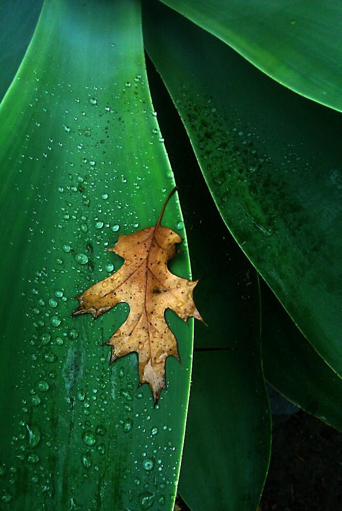 Fallen Leaf by Chris Whitney