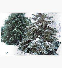 Winter's Blanket © Poster