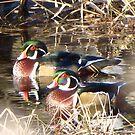 Wood Ducks together by Dee Belanger