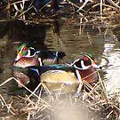 Sweet Wood Ducks by Dee Belanger