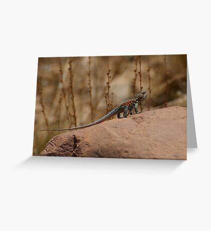Red Barred Dragon   Greeting Card