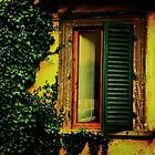 Old World Window by Barbara  Brown