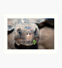 Turtle Face Art Print