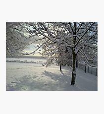 Heavy with Snow Photographic Print
