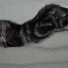 """"""" Kitten crash out ......"""" by CanyonWind"""