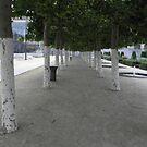 Brussles! Trees  by Olly  Pirozek