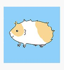 Beige and White Rough Haired Guinea-pig Photographic Print
