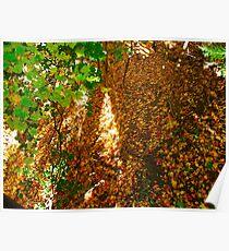 Leaf Ravine Poster