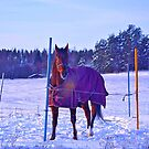 Out in the cold by Tarolino