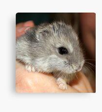 Stitch the Hamster Canvas Print