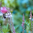 Bee in the meadow  by DIANE  FIFIELD