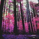 Forest of Fairy Dust by linmarie