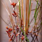 Wild Weeds by vigor