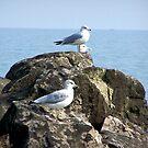 Birds at the Lake by BlackHairMoe