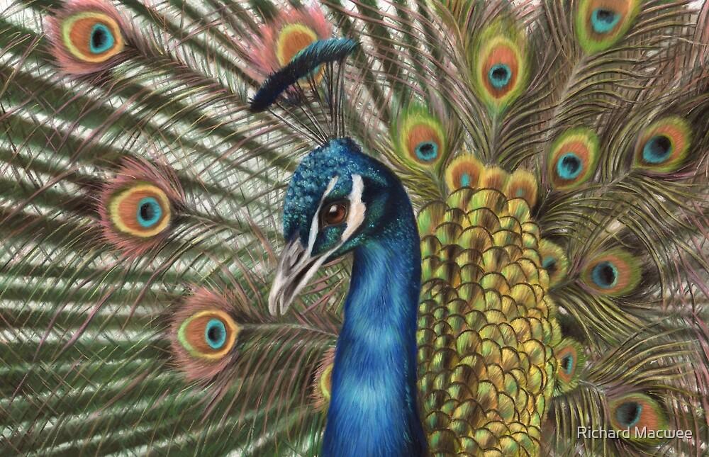 Peacock by Richard Macwee