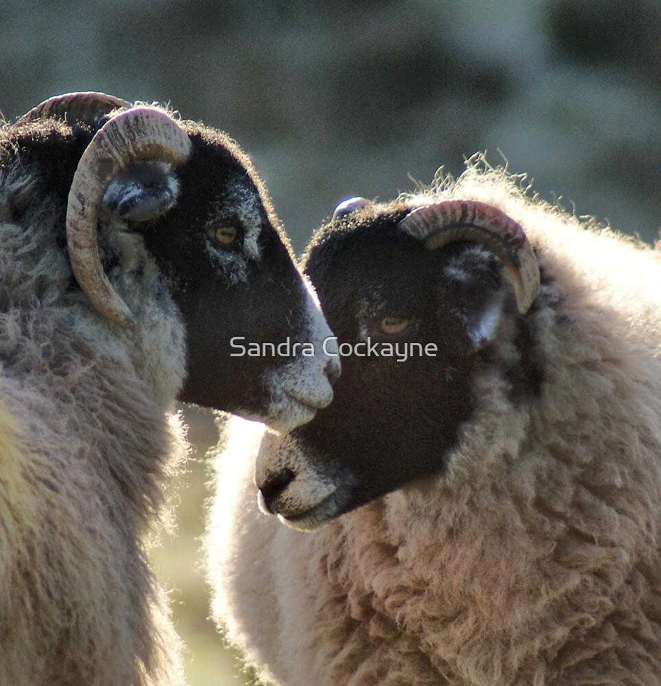 """I Love Ewe"" by Sandra Cockayne"