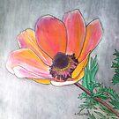 Single Anemone by Alexandra Felgate
