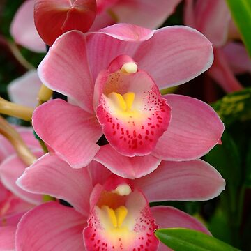 Orchid - orchidee - orchidée - orkidé - orquídea by Patje