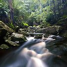 Tasmanian Stream by Alex Wise