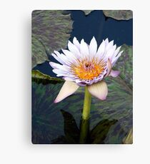 Water Lillies 11 Canvas Print