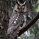 LEO  Revisited / Long Eared Owl by Gary Fairhead