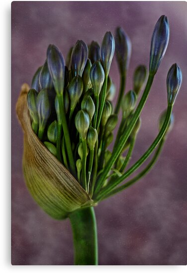 Springtime Colour by Dianne English