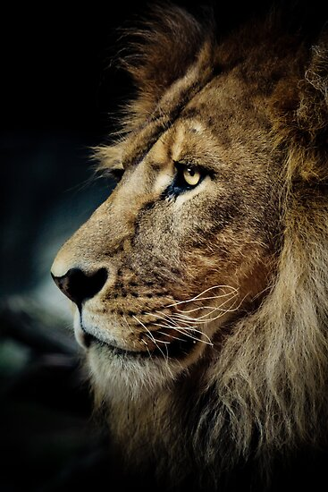 Lion by Natalie Manuel