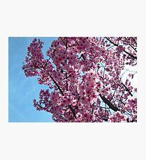 Blossoms up Close 4 Photographic Print