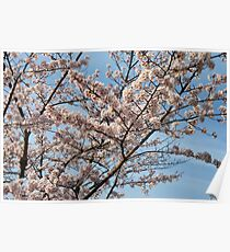 Colourful Spring Poster