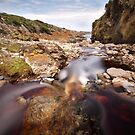 Tarkine Stream by Mike Calder