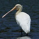 Yellow-billed Spoonbill by Rick Playle