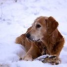 Snow dog by LadyFi
