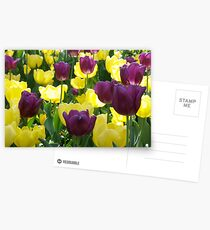 Tulips, Pittsburgh in Spring Postcards