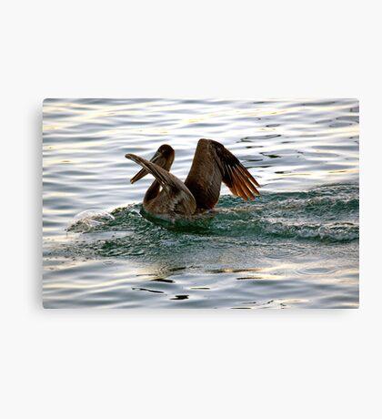 Brown Pelican Sunset Landing Canvas Print