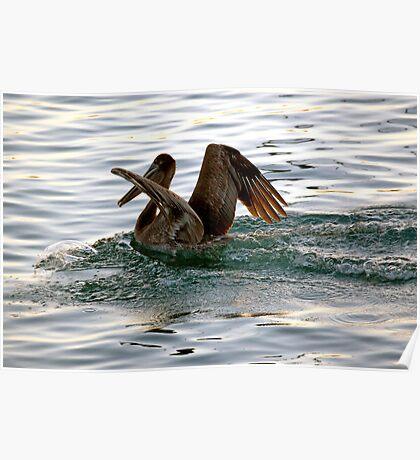 Brown Pelican Sunset Landing Poster