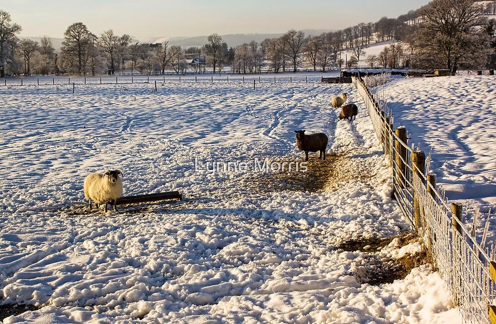 A Winter's Day by Lynne Morris