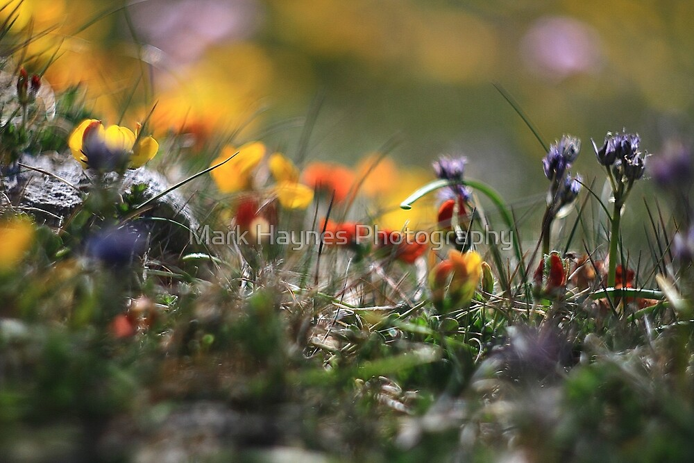 Helios Cliff Flowers -Vintage Russian Lens on Canon Eos by Mark Haynes Photography