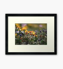 Helios Cliff Flowers -Vintage Russian Lens on Canon Eos Framed Print
