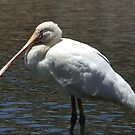 Spoonbill Capture Two by Rick Playle