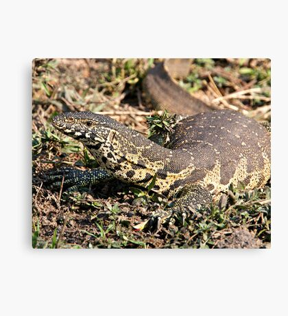 Nile Water Monitor Canvas Print