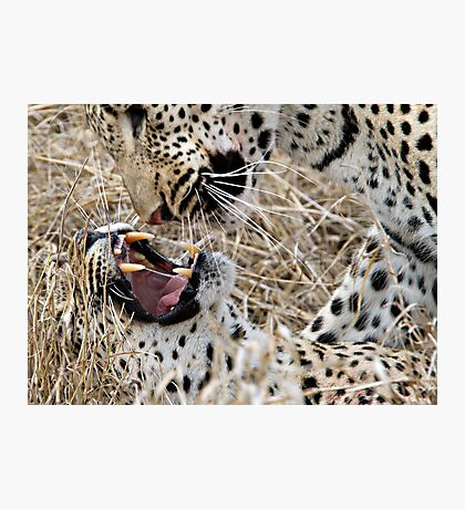Leopard Mom And Son Photographic Print