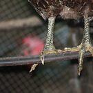 chicken feet by leapdaybride