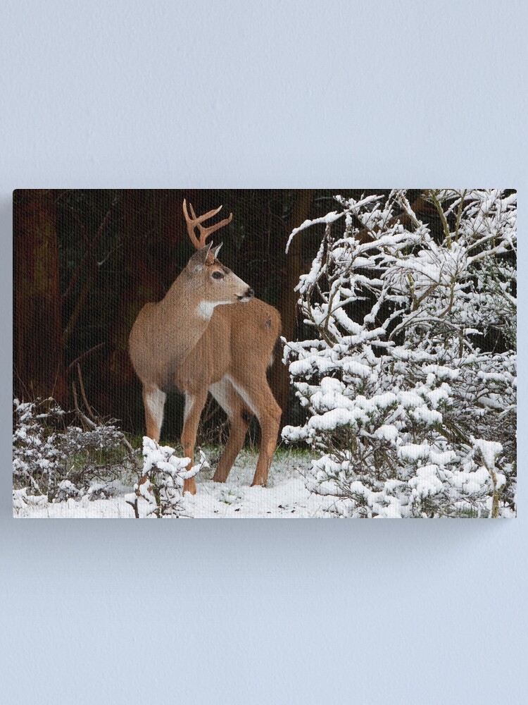 Alternate view of First Snow Canvas Print