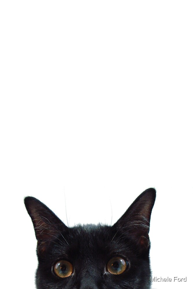 Curious Black Kitten by Michele Ford